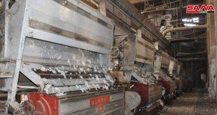 أكثر من 240 طناً كميات الأقطان المستلمة في محلج محردة